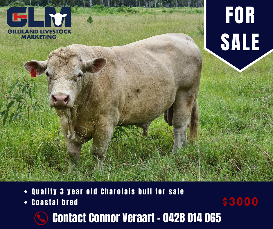 Copy of Copy of click below to view this weeks MLA Dalby Market ReportSale June 6th 2018 (9)