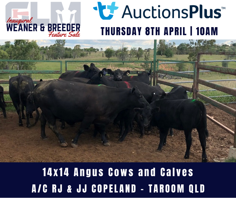 Copy of Copy of click below to view this weeks MLA Dalby Market ReportSale June 6th 2018 (43)